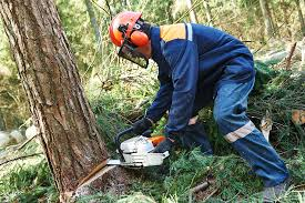 Tree Service In The South Metro Area